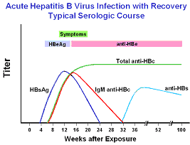 Hepatitis B viral antigens and antibodies detectable in the blood following acute infection