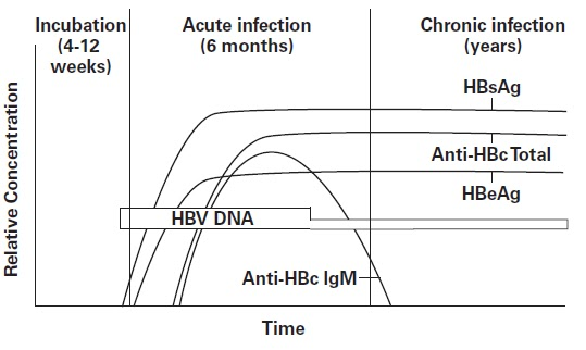 Hepatitis B viral antigens and antibodies detectable in the blood of a  chronically infected person