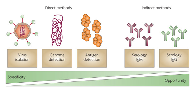 Direct and indirect diagnostic methods for dengue
